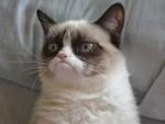 We konden geen foto vinden van Rachel, waarschijnlijk omdat ze niet bestaat, dus hier is een foto van een kat.
