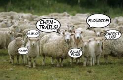Een kudde schapen die zonder nadenken de talloze complottheoriën herhalen zonder ze in vraag te stellen.